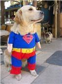 Super Man Dog Clothes Pet Costume Superman $20