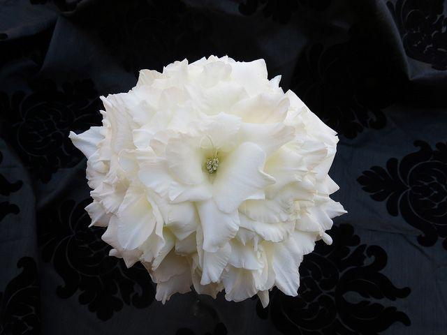 Gladiolus Glamelia Wedding Flowers Pinterest