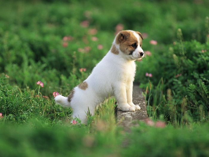 A healthy puppy comes from good breeding and care, not from puppy mill conditions
