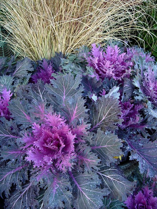 Potted Plants For Fall And Winter For The Home Pinterest