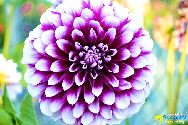 Flower Queenstown New Zealand Beautiful Flowers