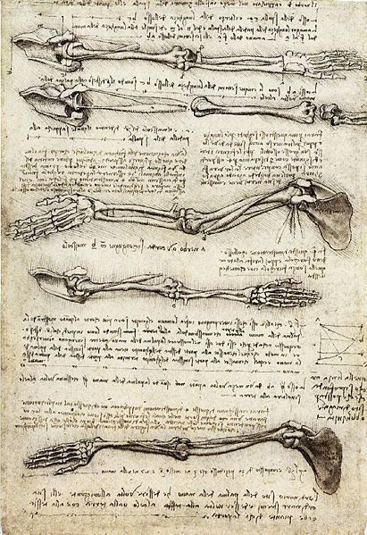 Leonardo Da Vinci anatomy drawing!
