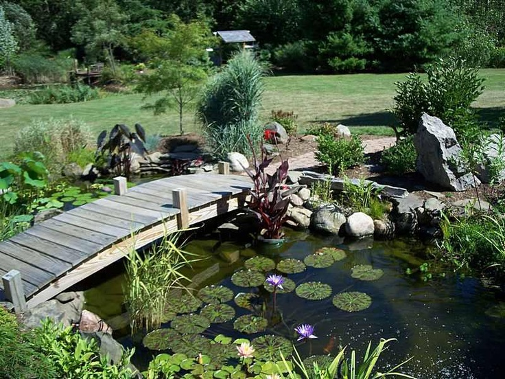 Natural Outdoor Pond : Natural looking garden pond  dream gardenbeautiful flowers  Pinter