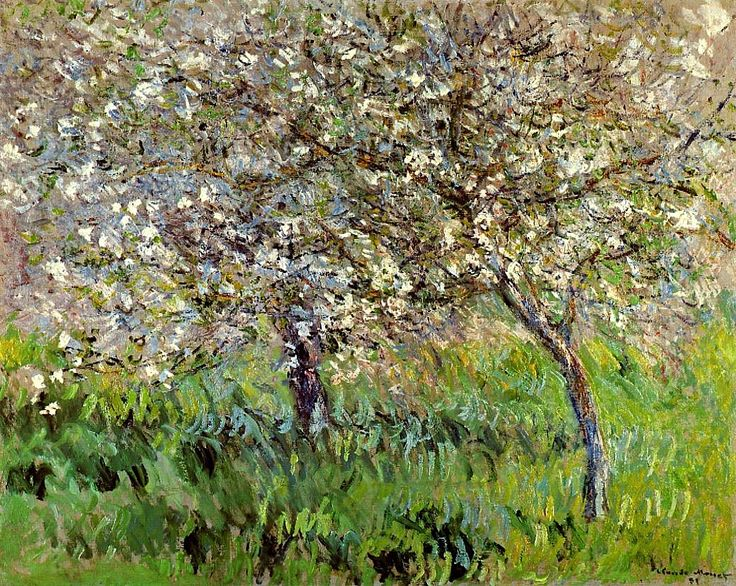 Apple Trees in Bloom at Giverny Claude Monet - 1900-1901