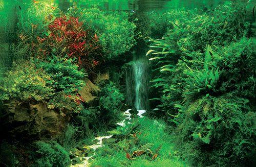 Live plant aquarium Aquariums /Ponds Pinterest