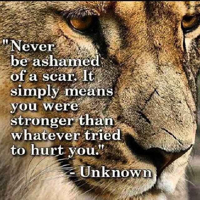 Love majewski quotes
