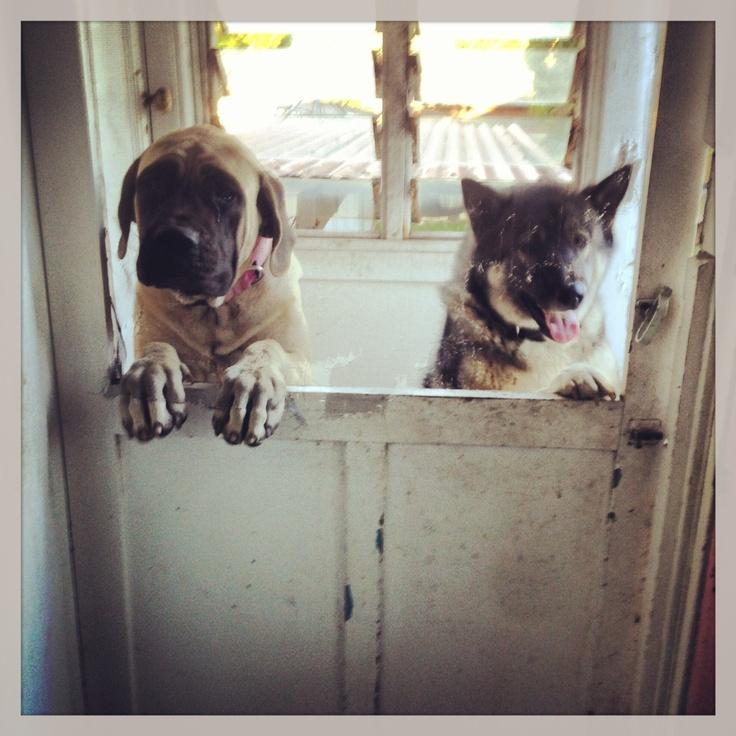 Foster Rescue Dog Newcastle