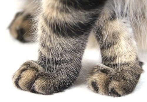 Little Kitty Paws...                                                  Cat Nipped Dream