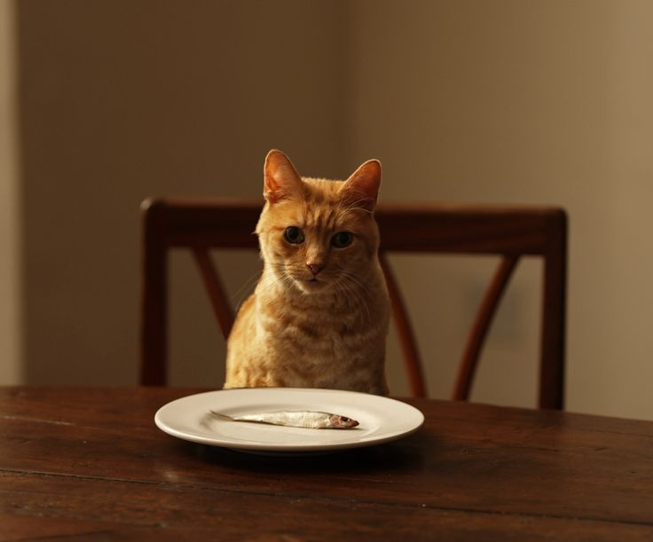 Fish Oil For Cats With Arthritis Help Your Cat To Cope