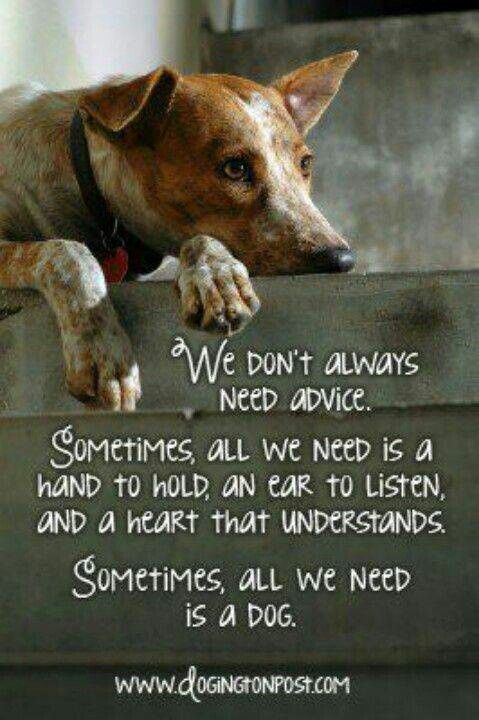 All you need is love a dog all you need is love a for What a dog needs