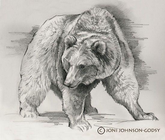 pencil drawings bears  eBay
