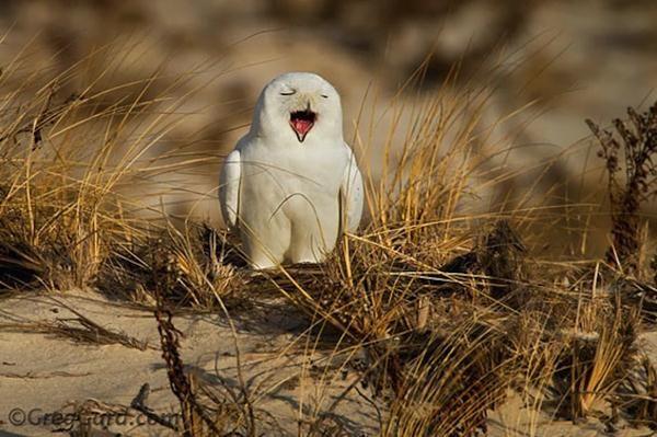 Funny Photos Yawning Animals Eyespopping