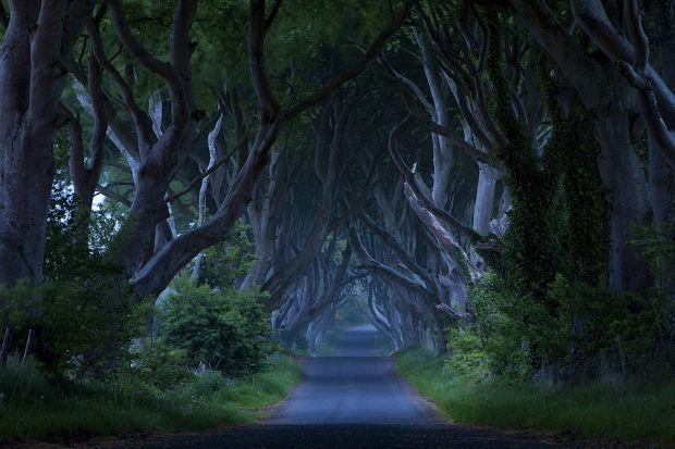 Dark Hedges Northern Ireland Nature Pinterest
