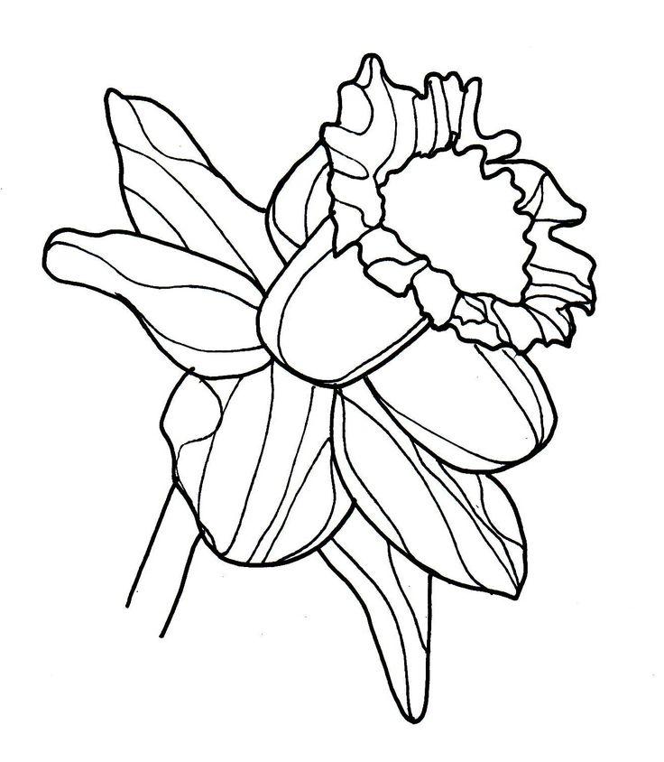Flower Head Line Drawing : Line drawing flowers daffodil angels pinterest