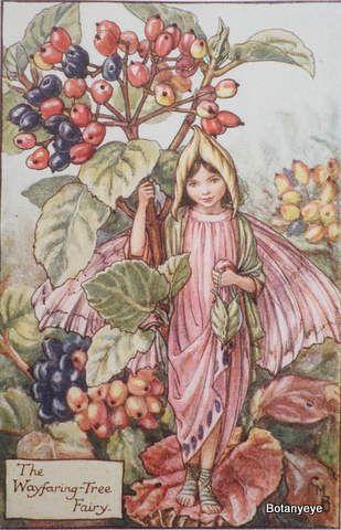 シシリー・メアリー・バーカーの画像 p1_23