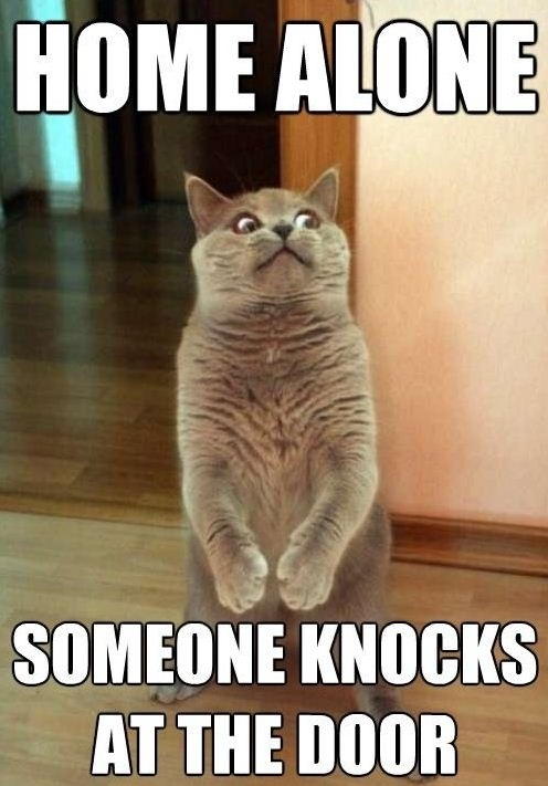 Home Alone The Doors, Cat Face, The Face, Funny Cat, Funny Stuff, So Funny, Kitty, Silly Cat, Animal