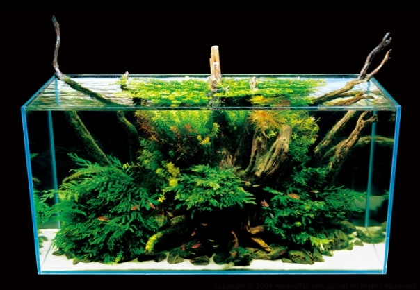 Pin by Vicki Tunkel on Aquascapes Pinterest