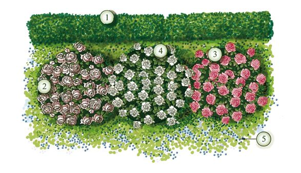 fotoe creare un 39 aiuola in giardino