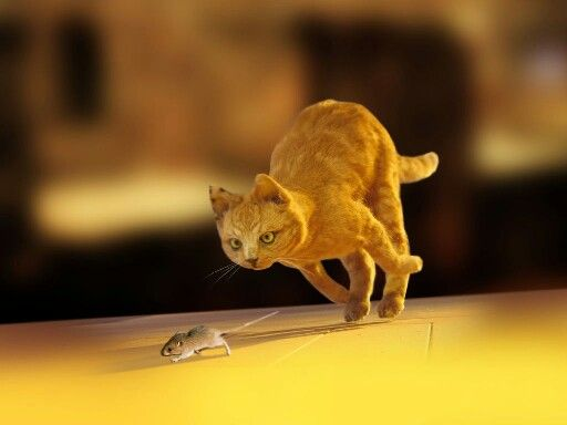 Cat And Mouse Chase Game