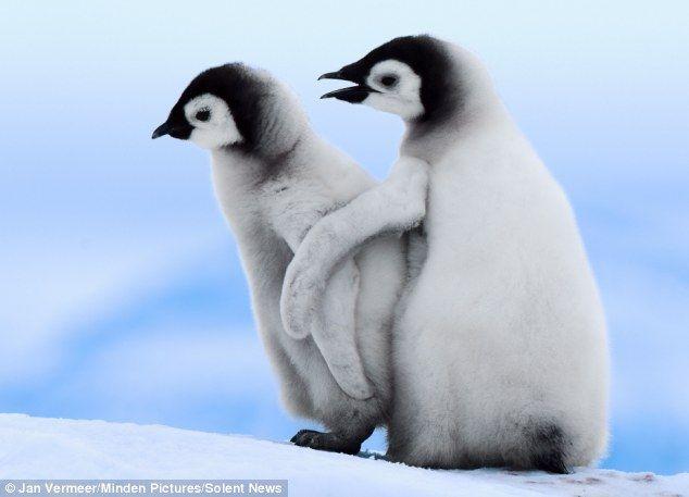 2匹のペンギン