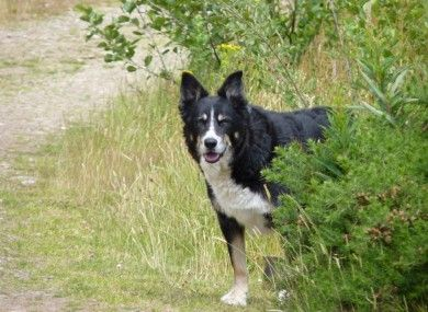 Twist of fate after lost dog is reunited with his family * A dog called Aran was found straying in Carrick-on-Shannon – and what happened next surprised everyone. --- (Beautiful story, with a sad part, but still beautiful..) <3