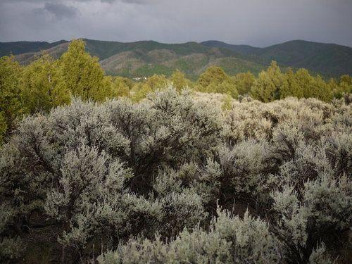 sage brush in NM - justine ashbee | Outdoor | Pinterest
