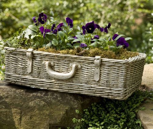 Basket of pansies.