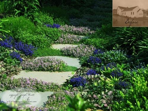 Ground Cover Garden Ideas Pinterest