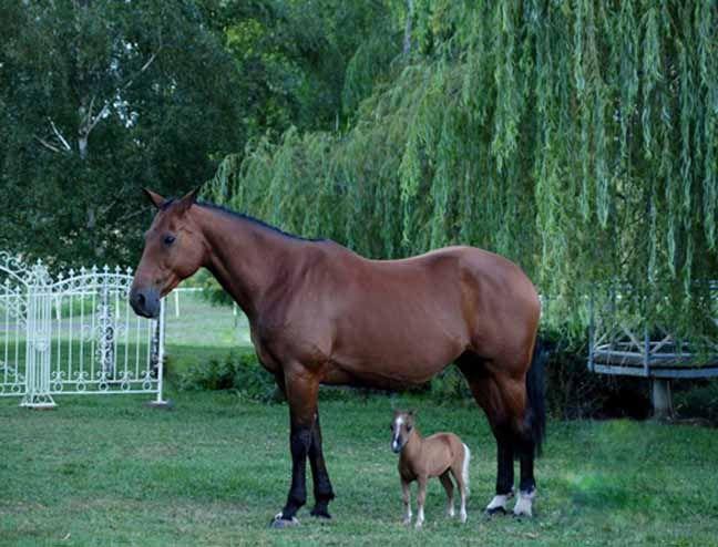 big stud breeds little mare | just b.CAUSE