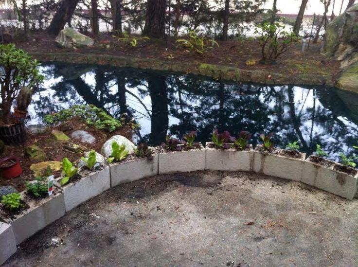 Cinder Block Garden Reuse Cinder Blocks Pinterest