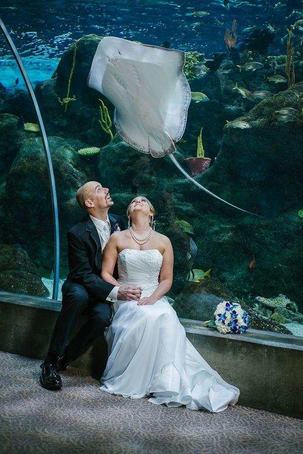 Pin By Celebrations Of Tampa Bay On Florida Aquarium
