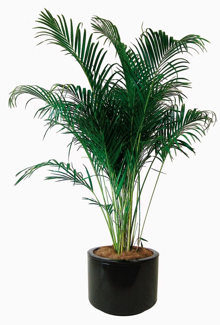 Good Indoor Plants That Filter Air Home Pinterest