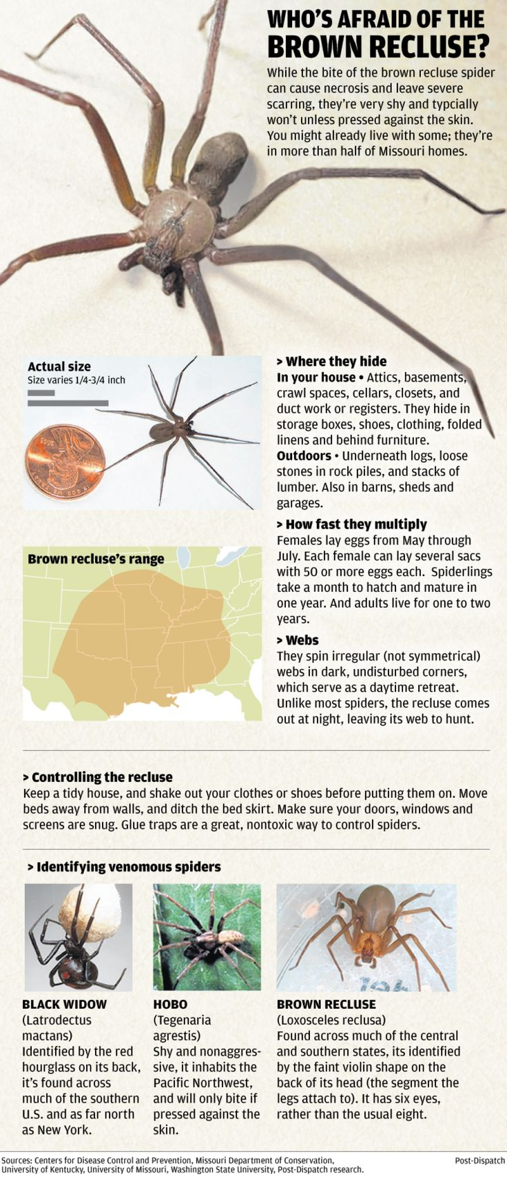 Brown recluse spider web pictures