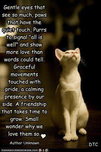 Cat poem pet quotes pinterest