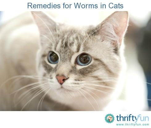 otc ringworm treatment