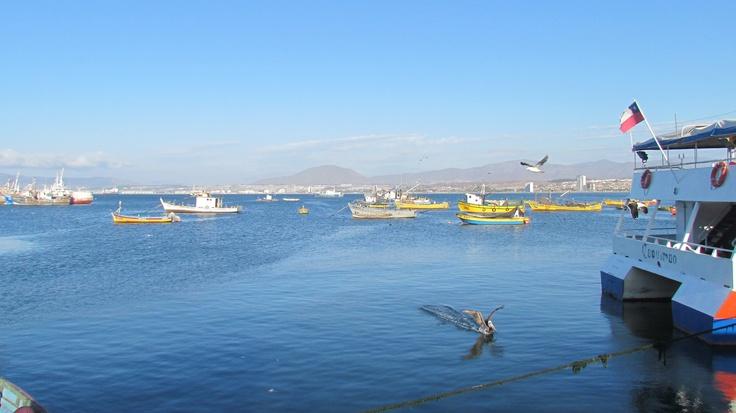 Puerto de Coquimbo. Coquimbo. IV Región. Chile.