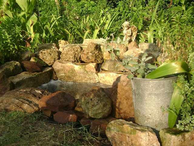 Frog pond in herb and wildflower garden front backyard for Small frog pond ideas