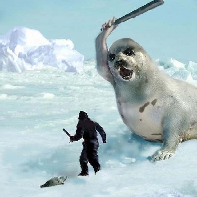 stop killing the seals Seal hunting, or sealing, is the personal or commercial hunting of seals seal hunting is currently practiced in eight countries and one region of denmark: canada, namibia, iceland, norway, russia, finland, sweden, and greenland most of the world's seal hunting takes place in canada and greenland canada's largest market for seals is norway.