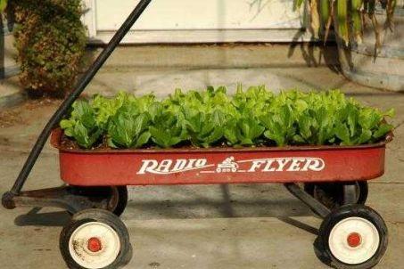 Jamie Oliver – Gardening – Saving Space!