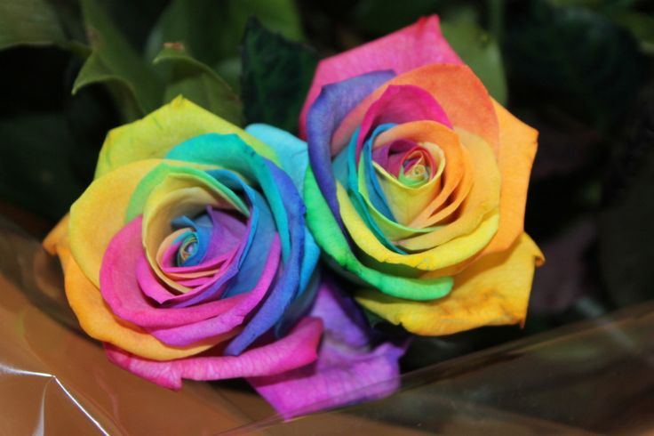 real rainbow roses nice pics pinterest