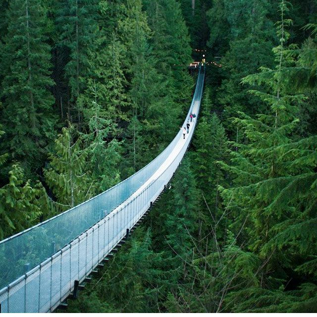 Capilano Suspension Bridge in Vancouver, B.C.,  in the middle of an evergreen forest.