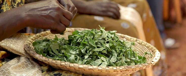 Recipe for Malaquan — Ugandan dish made from kale, tomato, peanut ...