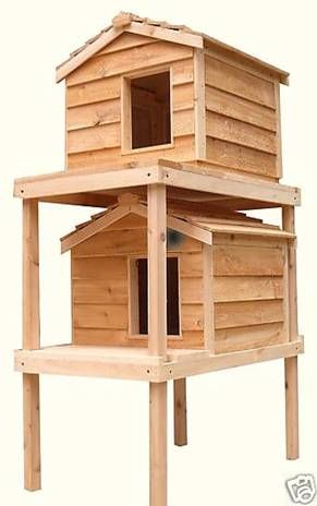 outdoor cat house for multiple cats