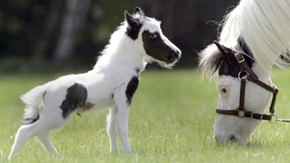 The Smallest Horse I've Ever Seen