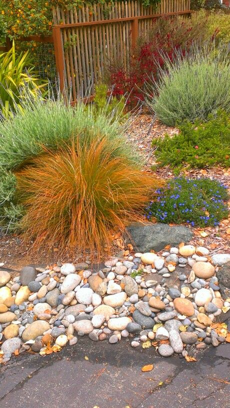 Ornamental grasses with rock border lots of landscaping for Small ornamental grasses for borders
