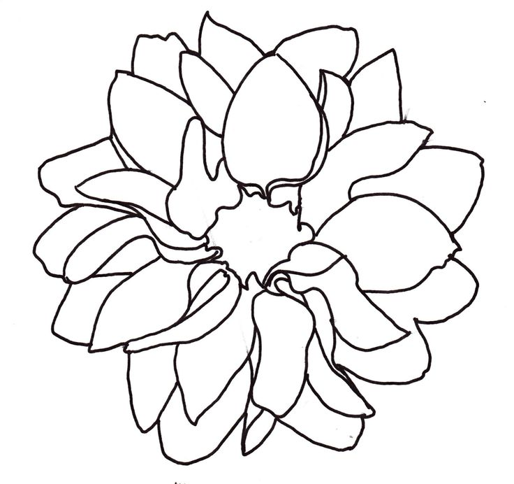 Dahlia Flower Line Drawing : Line drawing dahlia outline tattoed pinterest