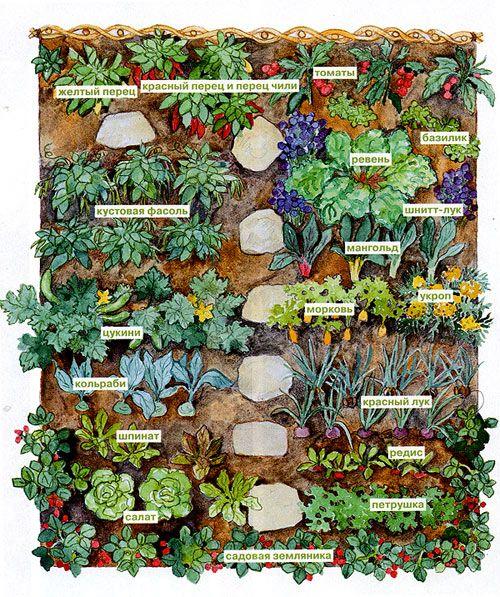 Как разбить огород и сад