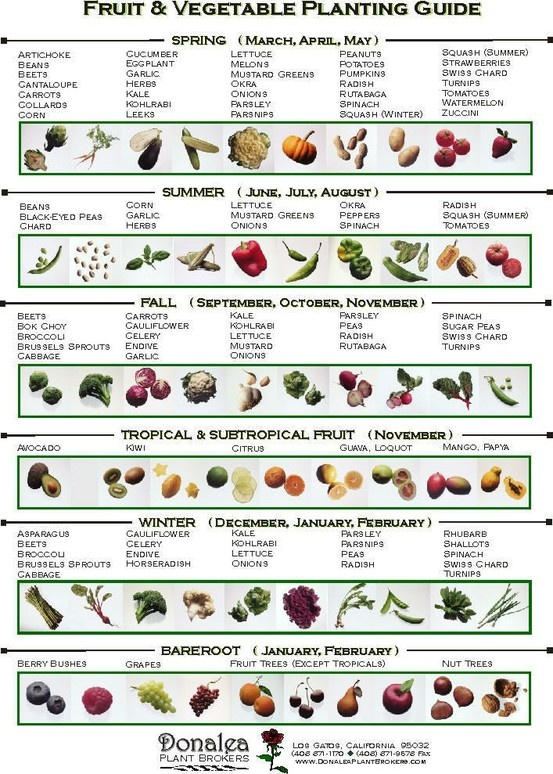 Vegetable Planting Calendar Zone 7 8 | Search Results | Calendar 2015