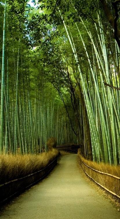 Bamboo Garden Kyoto My Eyes See Green Pinterest