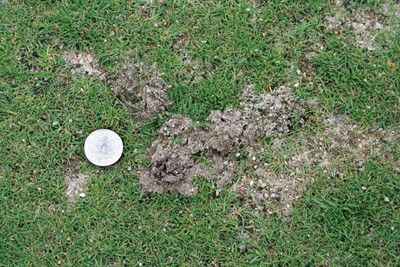how to get rid of crickets in lawn australia